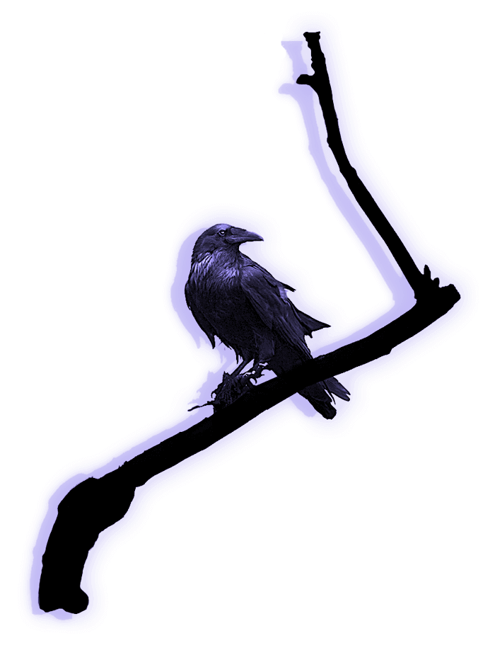 Raven on a branch